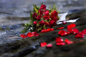 Płatki z różami